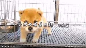 子犬の成長日記Vol.2のイメージ画像とリンク